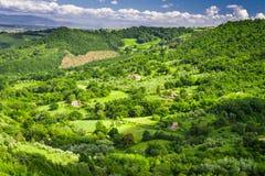 Bauernhöfe mit Feldern von Oliven und von Trauben Lizenzfreie Stockbilder