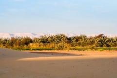 Bauernhöfe am Rand von Dünen Stockfoto