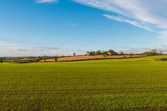 Bauernhöfe und Felder mit Reihen der frisch gekeimten hellgrünen Wintergerste lizenzfreie stockfotos