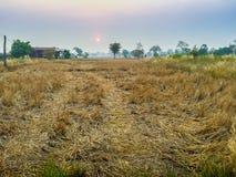 Bauernhaus auf dem Reisgebiet mit Sonnenaufgang morgens und Blau Lizenzfreies Stockfoto