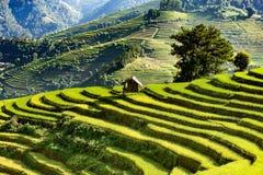 Bauernhaus auf terassenförmig angelegten Reisfeldern Lizenzfreie Stockfotos