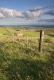 Bauernhaus auf Yorkshire-Heidemoor Lizenzfreies Stockbild