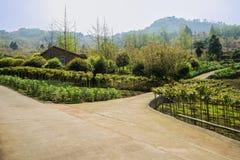 Bauernhaus an der Gabel von Bergabhang countryroad im sonnigen Frühling Stockbilder