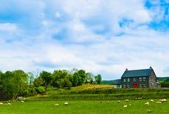 Bauernhaus mit Schafen auf Feld, Irland Lizenzfreie Stockfotos