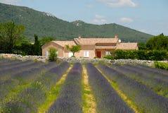 Bauernhaus und Lavendel stellen in Frankreich auf Lizenzfreie Stockfotografie