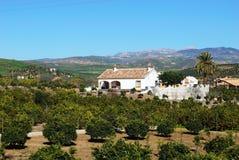 Bauernhaus und orange Waldung, Andalusien, Spanien. Stockbilder