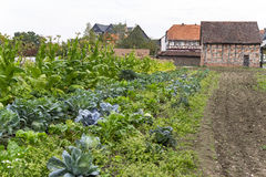 Bauernhausgarten Lizenzfreie Stockfotos