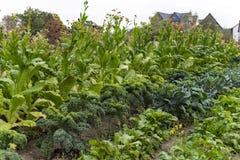 Bauernhausgarten Lizenzfreie Stockfotografie