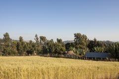 Bauernhof in Äthiopien Stockfoto