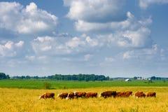 Bauernhof Lizenzfreies Stockfoto