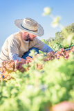 Bauernhof-Arbeit Lizenzfreies Stockbild