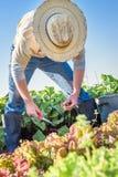 Bauernhof-Arbeit Lizenzfreie Stockbilder