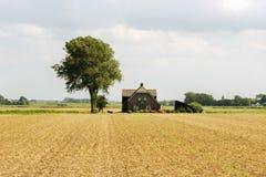Bauernhof auf dem Gebiet die Niederlande Stockfotografie
