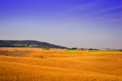 Bauernhof auf einem Gebiet des reifen Weizens Stockfotografie