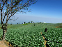 Bauernhof auf Hügel stockbild