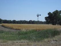Bauernhof auf Sunny Day Lizenzfreies Stockbild