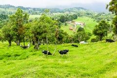 Bauernhof Costa Rica Lizenzfreies Stockfoto
