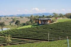 Bauernhof des grünen Tees mit Hintergrund des blauen Himmels Stockbilder