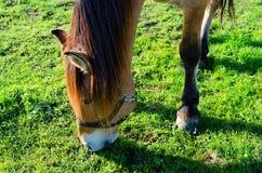 Bauernhof des Pferd Head Lizenzfreie Stockfotografie