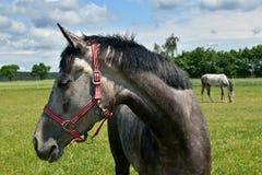 Bauernhof des Pferd Head Stockfotografie