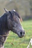 Bauernhof des Pferd Head Lizenzfreie Stockbilder