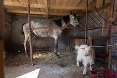 Bauernhof - ein Pferd und eine Ziege stockbild