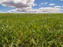 Bauernhof, Erntefeld. Landschaft mit grünem Gras. Spanien-Landwirtschaft. Lizenzfreies Stockfoto