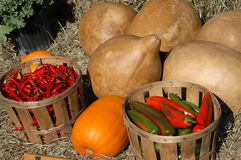 Bauernhof-Erzeugnis stockbild