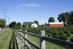 Bauernhof für Weihnachtsbäume Stockfoto