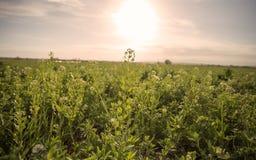 Bauernhof-Feld Lizenzfreie Stockfotos