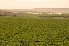 Bauernhof-Feld Stockfoto