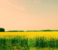Bauernhof-Feld Lizenzfreie Stockbilder