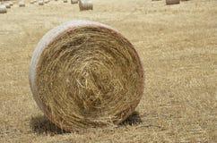 Bauernhof-Feld Lizenzfreies Stockfoto