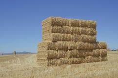 Bauernhof-Feld Lizenzfreies Stockbild