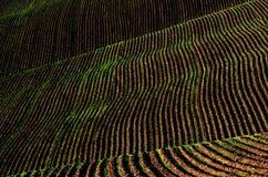 Bauernhof-Feld-gepflogene Schmutz-Grundfurchen bereit zum Pflanzen Lizenzfreie Stockfotos