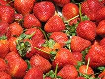 Bauernhof-frische Erdbeeren stockfotografie