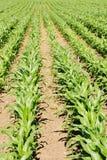 Bauernhof-Getreide Lizenzfreie Stockbilder