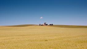 Bauernhof hat Felder des Weizens stockbilder