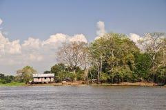 Bauernhof im Amazonas-Dschungel Lizenzfreies Stockfoto