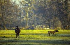 Bauernhof im Monza-Park Stockbild