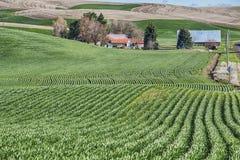 Bauernhof im Palouse Stockbilder