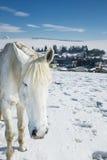 Bauernhof im Winter mit Pferden Stockbild