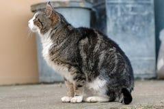 Bauernhof-Katze Lizenzfreie Stockbilder
