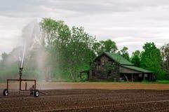 Bauernhof-Kriechpflanze Lizenzfreie Stockfotos