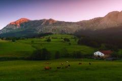 Bauernhof mit Kühen und Schafen in Atxondo Lizenzfreie Stockfotos