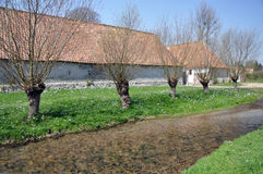 Bauernhof mit pollarded Bäumen Lizenzfreies Stockfoto