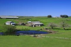 Bauernhof mit Weiden und weiden lassen Kühen Lizenzfreies Stockbild