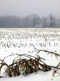 Bauernhof: schneebedecktes Maisfeld Stockfotos