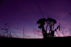 Bauernhof-Sonnenaufgang stockfotografie