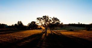 Bauernhof-Sonnenuntergang-Schatten Stockfotografie